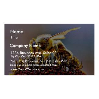 Abejas que recogen el polen tarjetas de visita