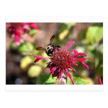 Abejas y floraciones - no se pierde nada postales