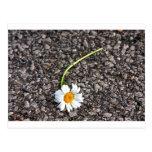 Abejas y floraciones - promesas quebradas postales