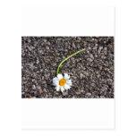 Abejas y floraciones - promesas quebradas tarjeta postal