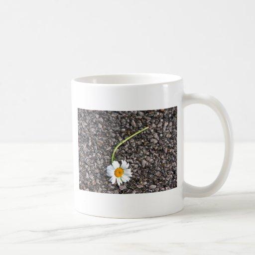 Abejas y floraciones - promesas quebradas tazas de café