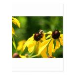 Abejas y floraciones - trabajo duro tarjeta postal