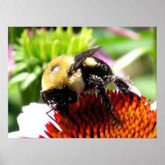 Abejorro con polen póster