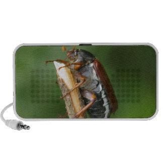 Abejorro de Maikäfer iPod Altavoces
