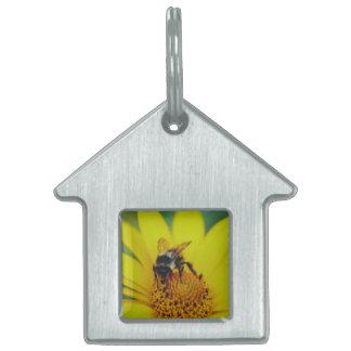 Abejorro en una macro amarilla de la flor placas mascota