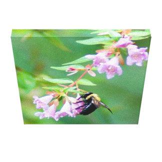 Abelia Bee Canvas Print