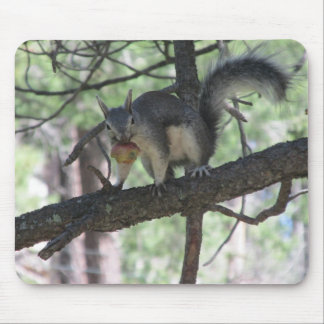 Abert's Squirrel Mouse Pad