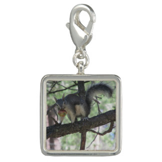 Abert's Squirrel Photo Charms