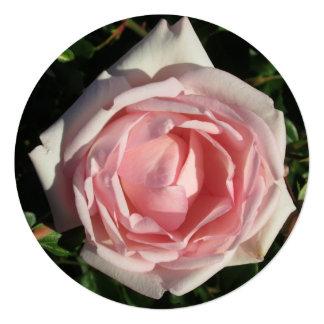 """Abertura del rosa color de rosa invitación 5.25"""" x 5.25"""""""