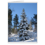 Abeto de la nieve tarjetas