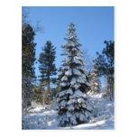 Abeto de la nieve tarjetas postales