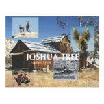 ABH Joshua Tree Post Cards