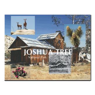 ABH Joshua Tree Postcard
