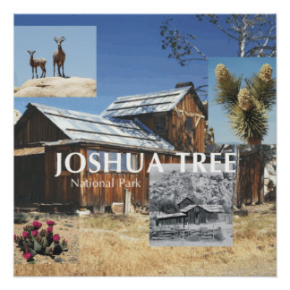 ABH Joshua Tree Perfect Poster