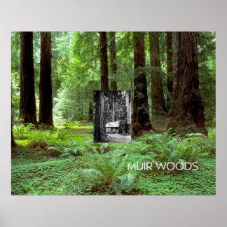 ABH Muir Woods Poster