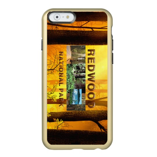 Redwoods National Park Phone Case