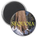 ABH Sequoia Magnets