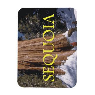 ABH Sequoia Rectangular Photo Magnet