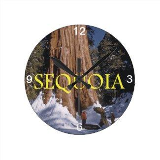 ABH Sequoia