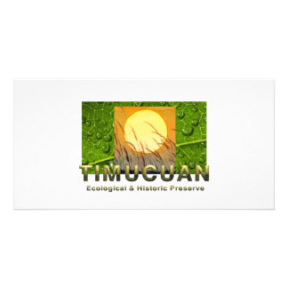 ABH Timucuan Card