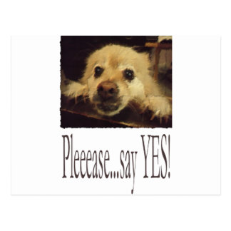 Abogar por el perro postales