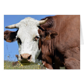 Abondance cow in the French Alps Card