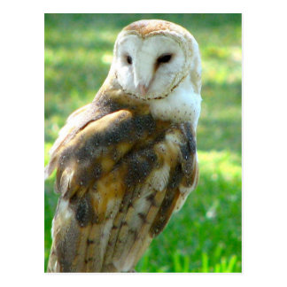 About Barn Owl Postcard