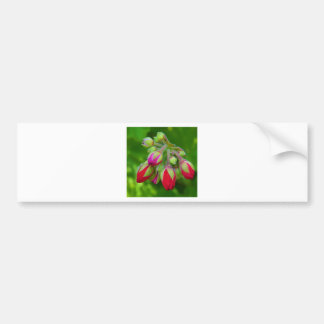 About to blossom bumper sticker