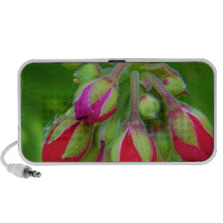 About to blossom travel speaker