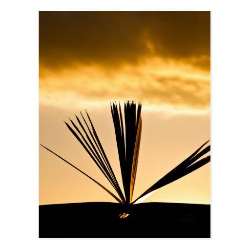 Abra el libro y la fotografía de la puesta del sol tarjetas postales