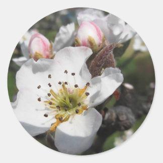 Abra la flor blanca de la manzana y los brotes pegatina redonda