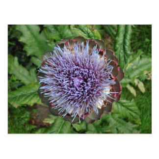 Abra la flor de la alcachofa. Púrpura Postal