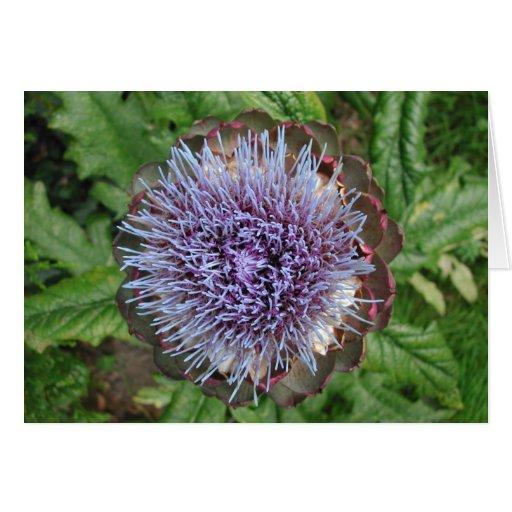 Abra la flor de la alcachofa. Púrpura Tarjeta