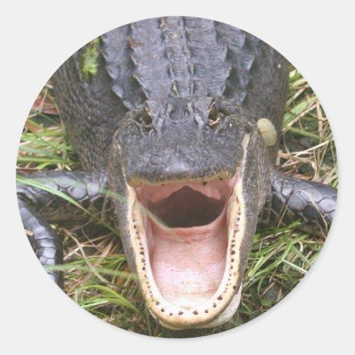 ¡Ábrase de par en par! Cocodrilo de la Florida Pegatina Redonda