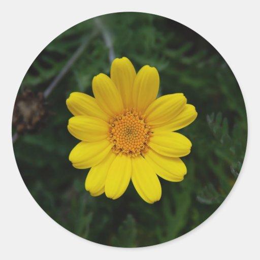 Ábrase para amar la manzanilla amarilla pegatinas redondas