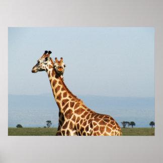 Abrazo de la jirafa de la madre y del bebé póster