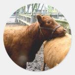 Abrazo de la vaca etiquetas redondas