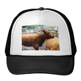 Abrazo de la vaca gorro