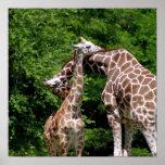 Abrazo de las jirafas impresiones