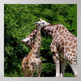 Abrazo de las jirafas póster