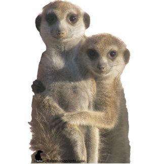 Abrazo de Meerkats - escultura de la foto Esculturas Fotograficas