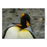 Abrazo de rey pingüinos tarjetas