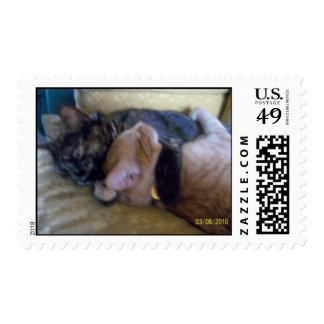 Abrazo de sellos de los gatitos