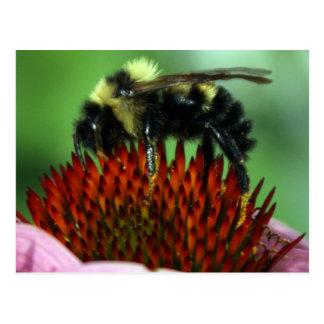 Abrazo de una postal de la flor
