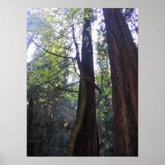 Abrazo del árbol poster
