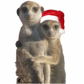 Abrazo del ornamento de los meerkats escultura fotográfica