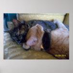 Abrazo del poster grande de los gatitos