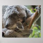 Abrazo dormido de las koalas del joey de la madre póster