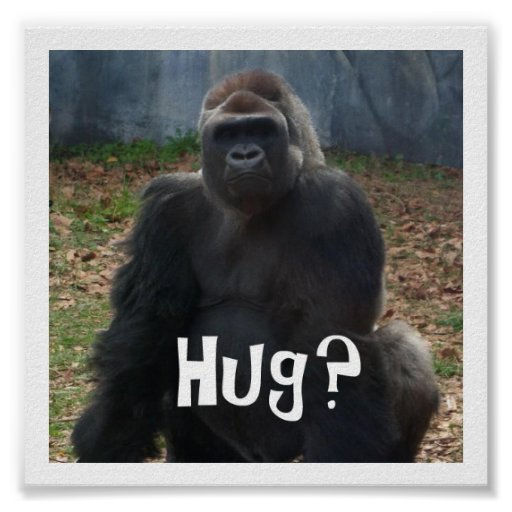 ¿Abrazo? Poster del gorila