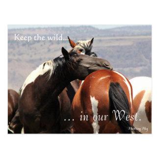 Abrazo salvaje de la yegua, con seña preimpresa: postal